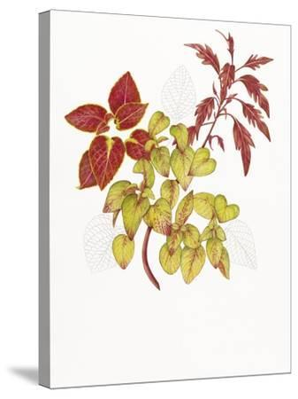 Coleus Collage-Deborah Kopka-Stretched Canvas Print