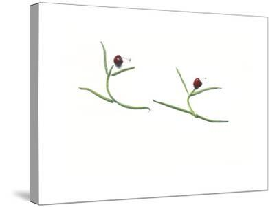 String Bean Cherrie Dancers-Donna Basile-Stretched Canvas Print