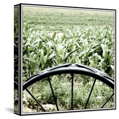 Vegetable Garden-Harold Silverman-Stretched Canvas Print