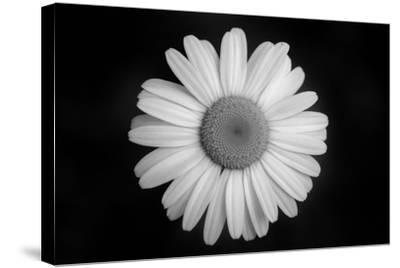 Ash River 08-Gordon Semmens-Stretched Canvas Print