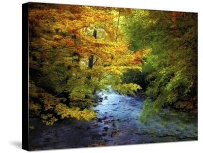 River View-Jessica Jenney-Stretched Canvas Print