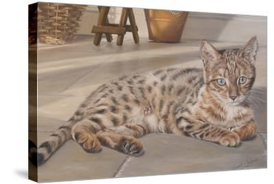 Bengal Kitten-Janet Pidoux-Stretched Canvas Print