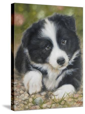 Border Collie-John Silver-Stretched Canvas Print