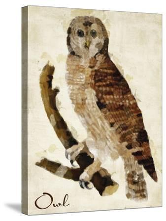 Brown Owl-Mindy Sommers-Stretched Canvas Print