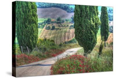 Tuscan Red Flower Road-Robert Goldwitz-Stretched Canvas Print