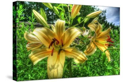 June Lilies-Robert Goldwitz-Stretched Canvas Print