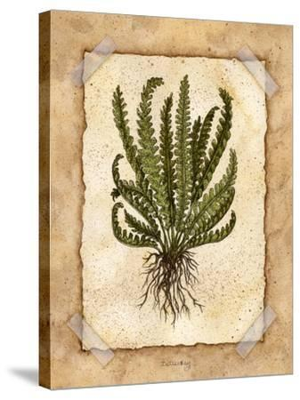 Fern 4-Robin Betterley-Stretched Canvas Print