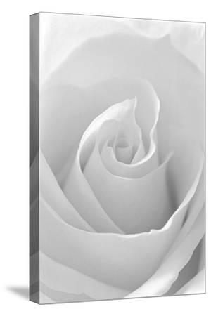 Black and White Rose Abstract-Anna Miller-Stretched Canvas Print