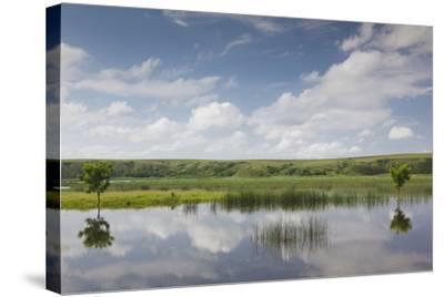 Romania, Danube River Delta, Baltenii de Sus, Danube River Reflection-Walter Bibikow-Stretched Canvas Print