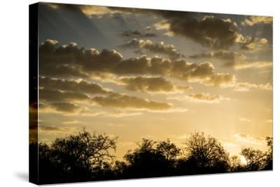 Kenya, Chyulu Hills, Old Donyo Wuas Lodge, Mbirikani, Sunrise-Alison Jones-Stretched Canvas Print