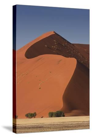 Sossusvlei, Namibia. Red Sand Dunes-Janet Muir-Stretched Canvas Print