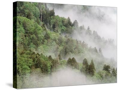 USA, Tennessee, North Carolina, Great Smoky Mountains National Park-Zandria Muench Beraldo-Stretched Canvas Print
