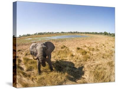 Botswana, Moremi Game Reserve, Elephant in Wetlands of Okavango Delta-Paul Souders-Stretched Canvas Print