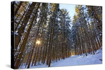 Cross-Country Ski Trail in a Spruce Forest, Windsor, Massachusetts-Jerry & Marcy Monkman-Stretched Canvas Print