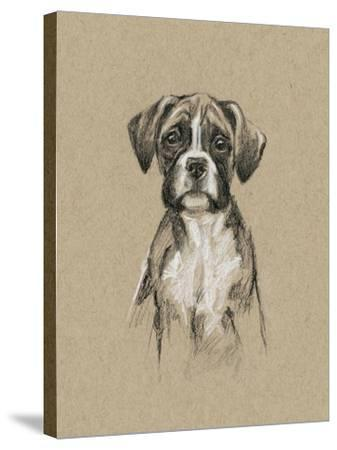 Breed Sketches V-Ethan Harper-Stretched Canvas Print