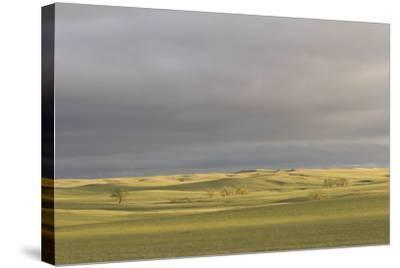 A Thunderstorm Above Oglala National Grassland in Nebraska-Phil Schermeister-Stretched Canvas Print