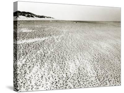 Baltrum Beach, no. 6-Katrin Adam-Stretched Canvas Print