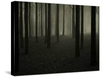 Buzztube-David Baker-Stretched Canvas Print