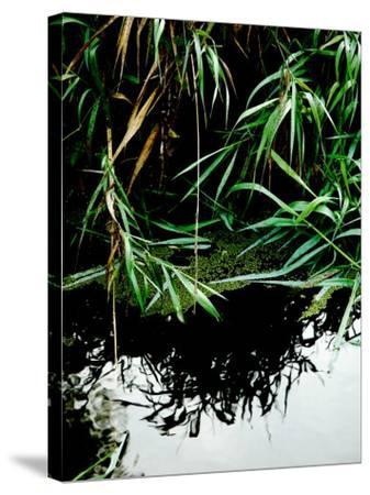 Wordbridge-Tim Kahane-Stretched Canvas Print