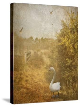 Buzzbird-Lynne Davies-Stretched Canvas Print