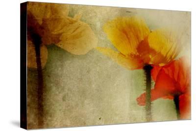 Poppies Talking-Mia Friedrich-Stretched Canvas Print