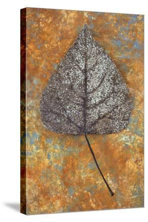 Close Up of Brown and Bleached Autumn or Winter Leaf of Black Poplar or Populus Nigra Tree-Den Reader-Stretched Canvas Print