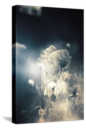 Close Up of Poppy-Mia Friedrich-Stretched Canvas Print