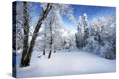 Days to Come-Philippe Sainte-Laudy-Stretched Canvas Print