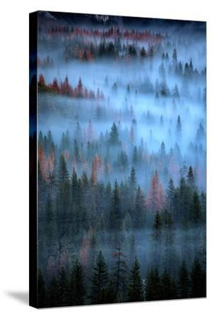Mesmerizing Fog and Trees, Yosemite Valley, National Parks, California-Vincent James-Stretched Canvas Print