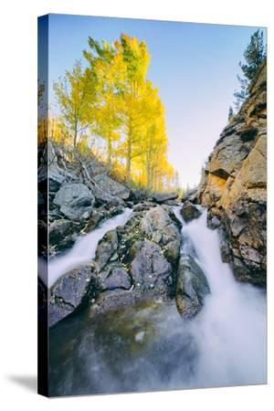 Autumn Flow at Bishop Canyon Creek, Eastern Sierras California-Vincent James-Stretched Canvas Print