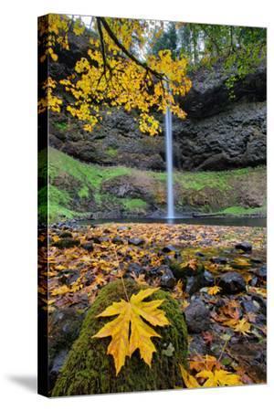 Autumn at South Falls, Silver Falls State Park, Silverton, Oregon-Vincent James-Stretched Canvas Print