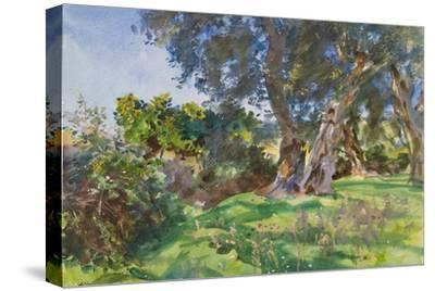 Olive Trees, Corfu-John Singer Sargent-Stretched Canvas Print