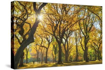 Usa, New York City, Manhattan, Central Park, the Mall-Michele Falzone-Stretched Canvas Print
