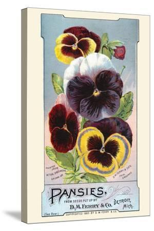 Pansies--Stretched Canvas Print