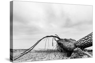 Fallen Tree on the Beach after Storm. Sea on a Cloudy Day. Black and White, far Horizon.-Michal Bednarek-Stretched Canvas Print