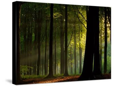 Before the Fall- Joris-Stretched Canvas Print