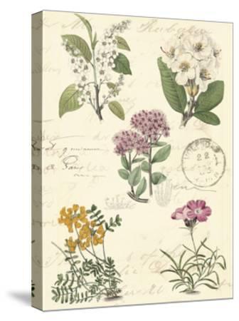 Botanical Journal II-Vision Studio-Stretched Canvas Print