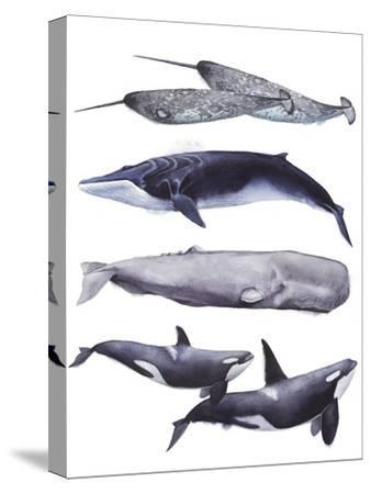 Whale Stack II-Grace Popp-Stretched Canvas Print
