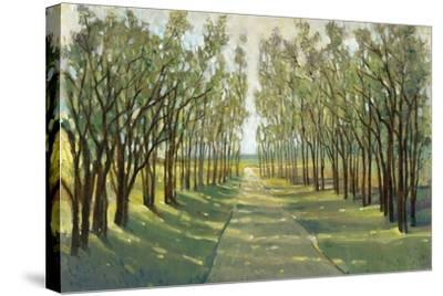 Forest Path-Tim OToole-Stretched Canvas Print