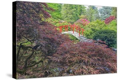 Seattle, Kubota Gardens, Spring Flowers and Japanese Maple with Moon Bridge in Reflection-Terry Eggers-Stretched Canvas Print