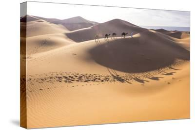 Morocco, Erg Chegaga Is a Saharan Sand Dune-Emily Wilson-Stretched Canvas Print