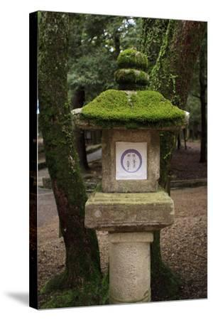 Kasuga-Taisha Shrine-Paul Dymond-Stretched Canvas Print