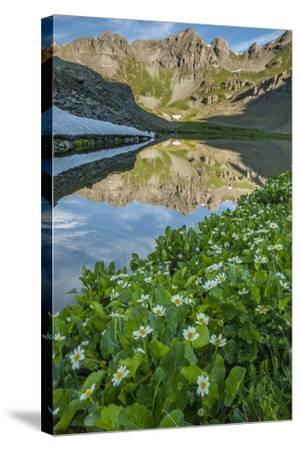 USA, Colorado, San Juan Mountains. Clear Lake Reflection and Marigolds-Jaynes Gallery-Stretched Canvas Print