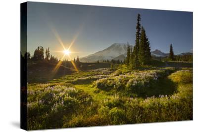 Starburst Setting Sun, Subalpine Wildflowers and Mt. Rainier at Mazama Ridge, Paradise Area-Gary Luhm-Stretched Canvas Print