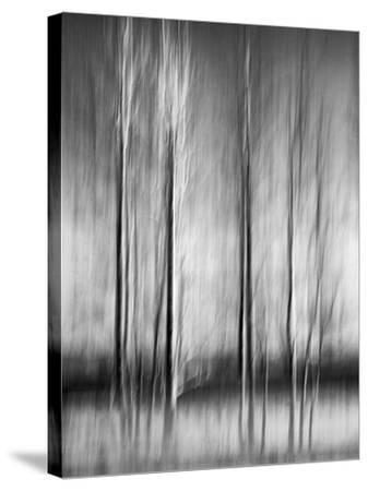 USA, California, Lake Tahoe, Abstract of Bare Aspen Trees and Snow at Carnelian Bay-Ann Collins-Stretched Canvas Print