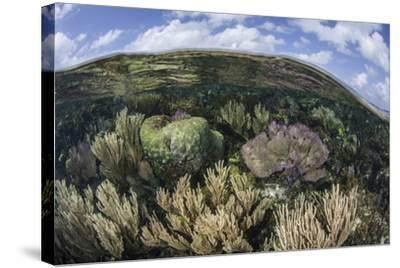 Gorgonians and Reef-Building Corals Near the Blue Hole in Belize-Stocktrek Images-Stretched Canvas Print