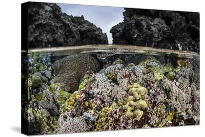 A Colorful Coral Reef Grows in Shallow Water in the Solomon Islands-Stocktrek Images-Stretched Canvas Print
