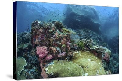 A Beautiful Coral Reef Thrives on an Underwater Slope in Indonesia-Stocktrek Images-Stretched Canvas Print