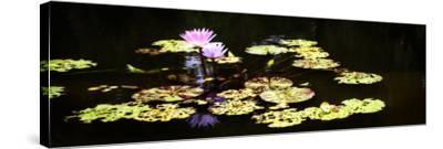 Lake Lilies I-Alan Hausenflock-Stretched Canvas Print