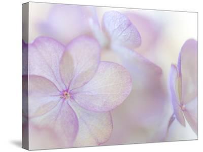 Pink Diamond III-Kathy Mahan-Stretched Canvas Print